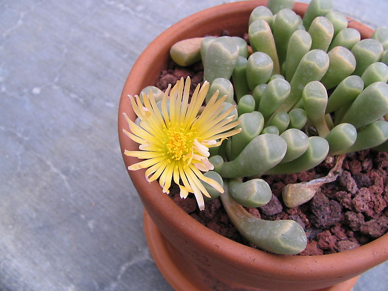 Baby Toes Bloom 2, 1
