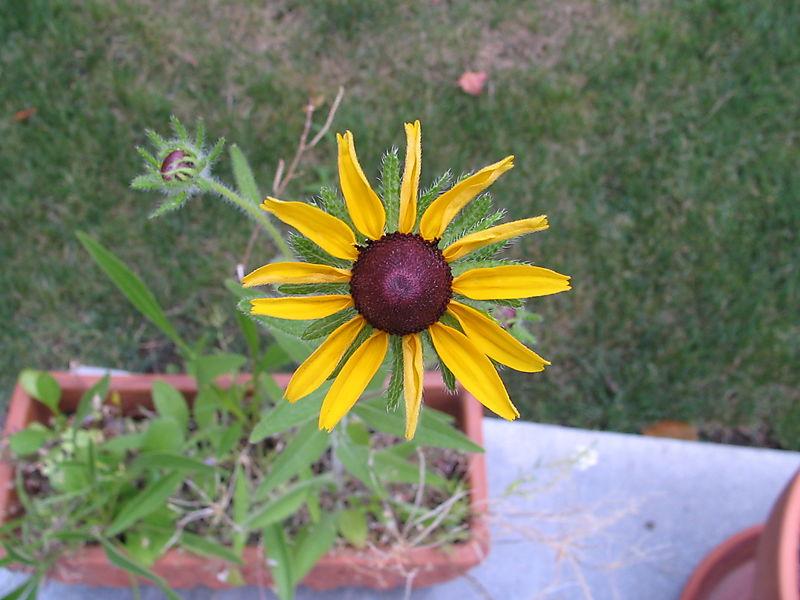 Yellow and Purple Wildflower, 1