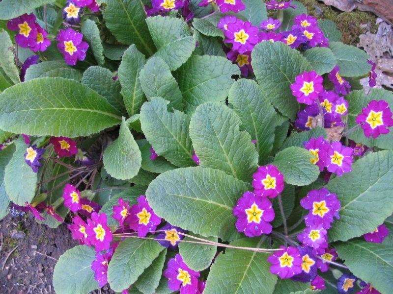 Spring Flowers 09, 2