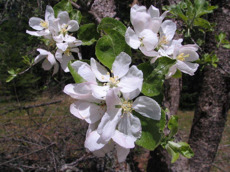 Spring Flowers 09, 8