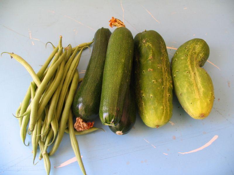 Beans, Zuchinni, Cucumbers, 1