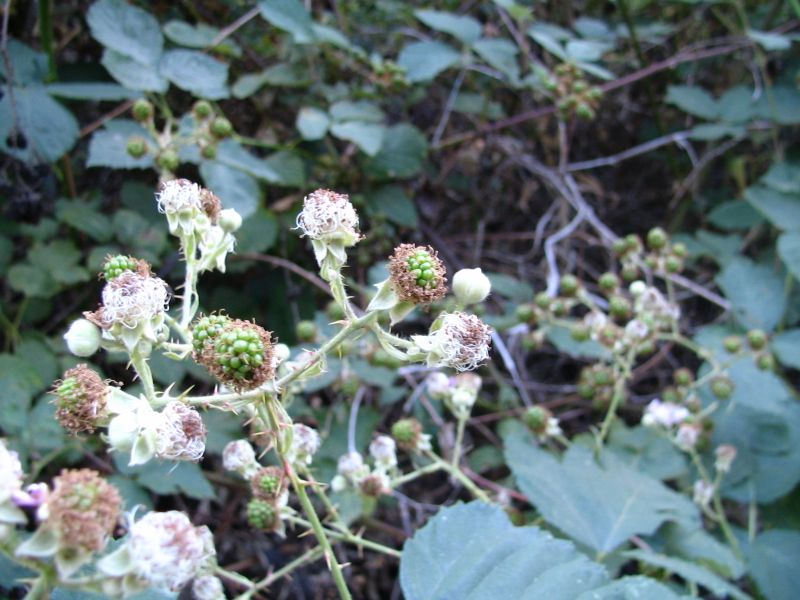 Blackberries We Kept, 4