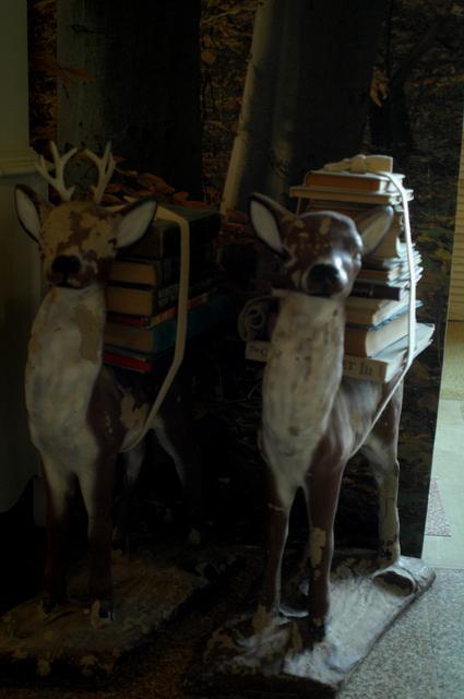 Shih deer