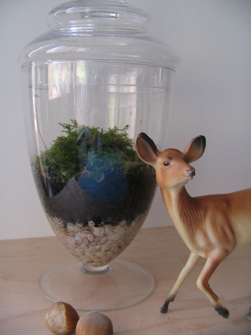 Deer, Terrarium, Hazelnuts, Mushroom, 3
