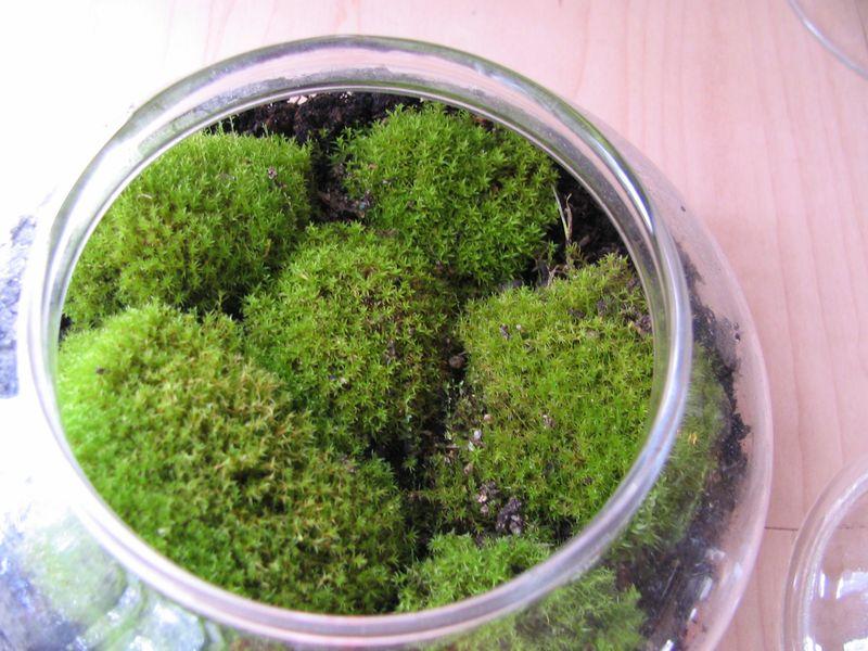 Clumpy Moss Terrarium, 1