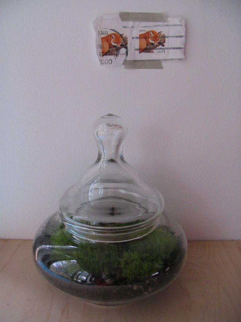 Clumpy Moss Terrarium, 2