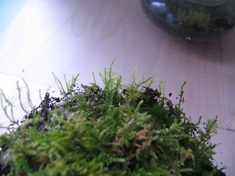 Terrariums update_3