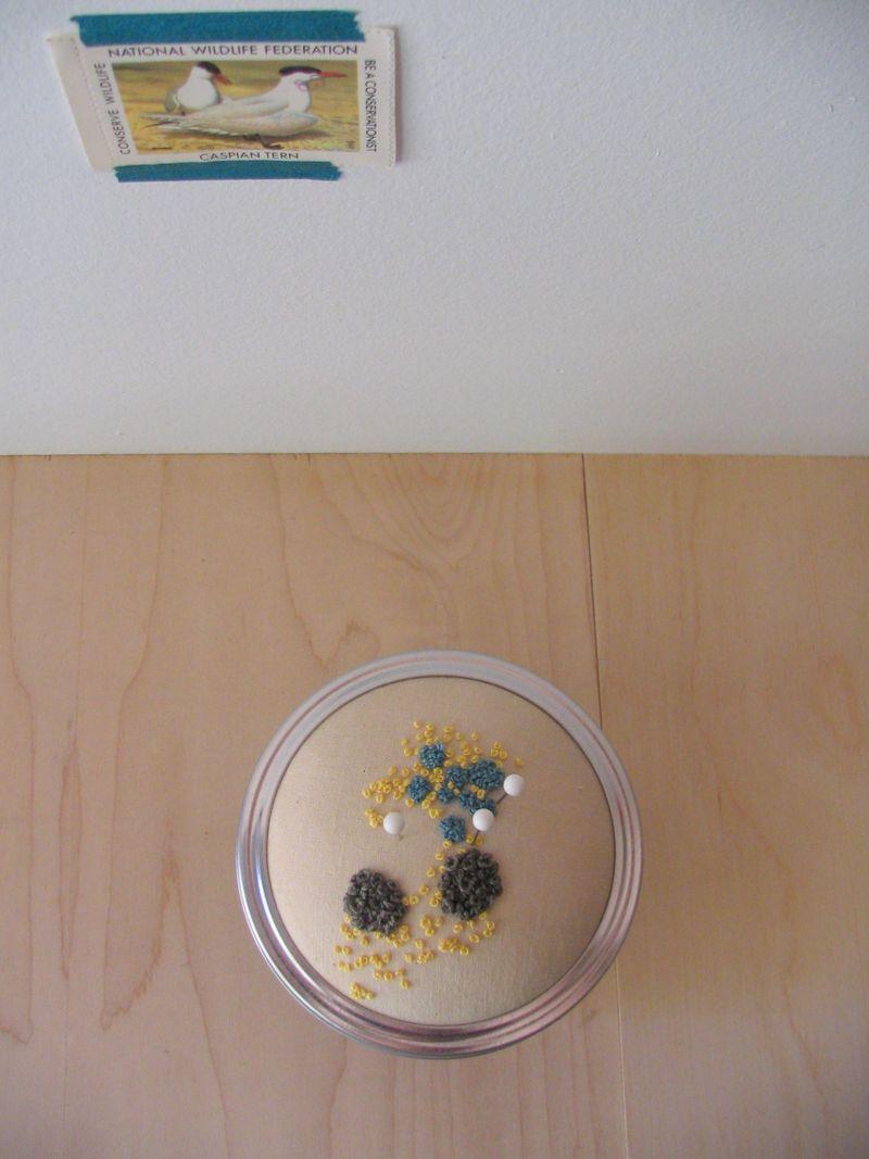 Lichen Jar 4_3_e