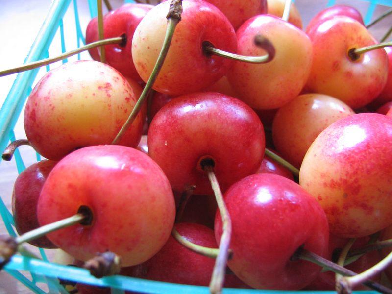 Local Cherries 2