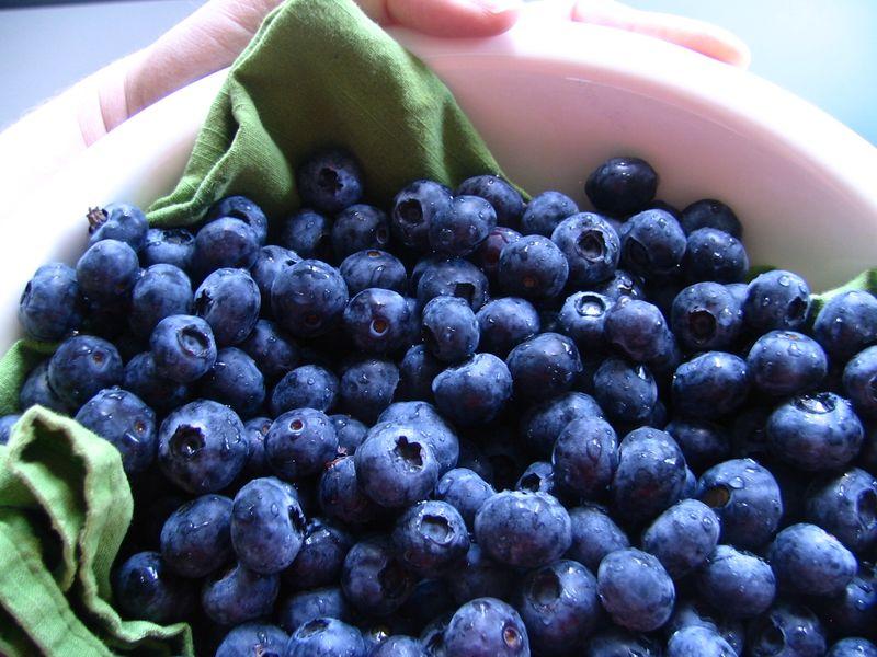 U Pick Blueberries