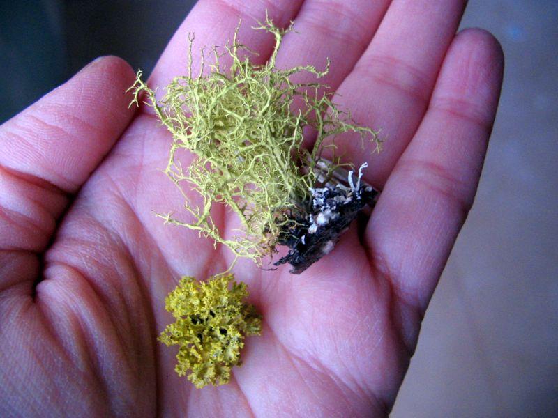 Neon lichen, 2_e