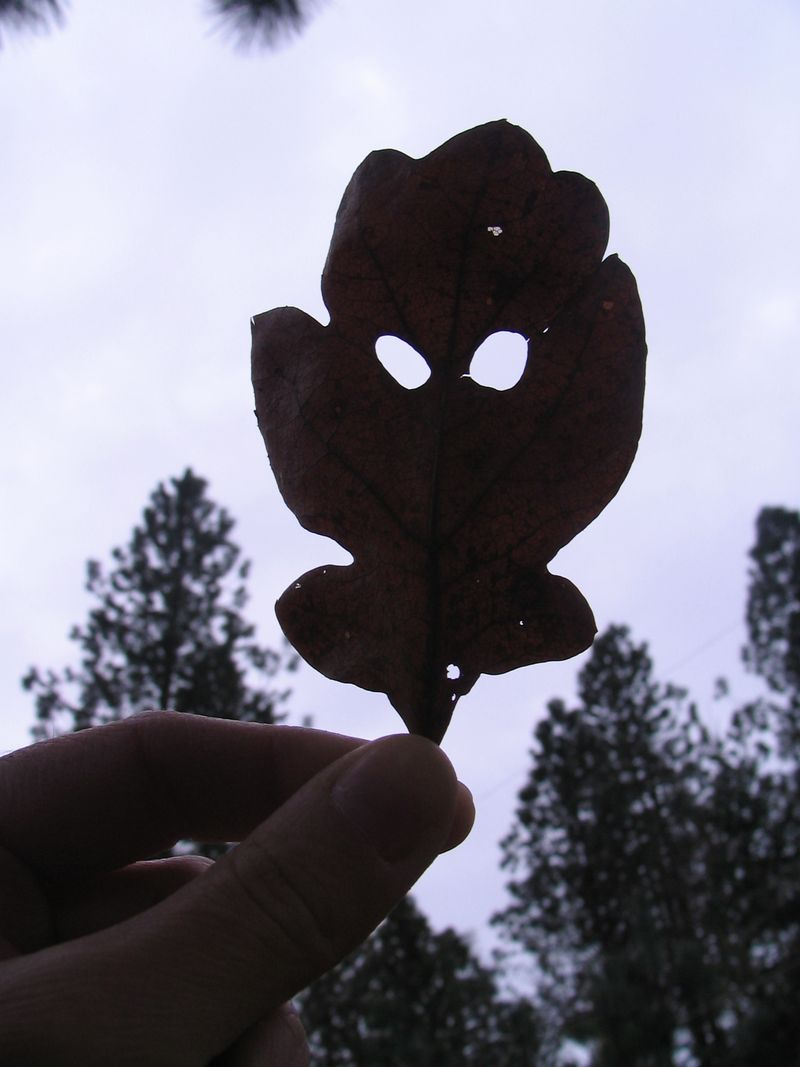 Leaf with Eyes 2
