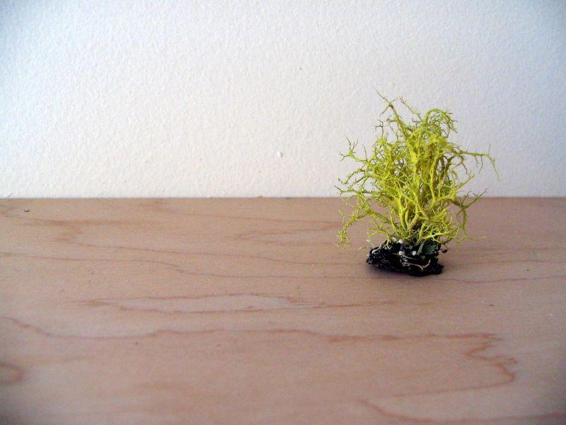 Neon lichen, 1_e