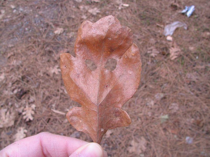 Leaf with Eyes 1
