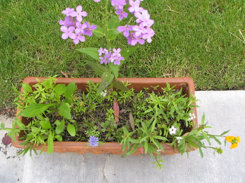 Container_of_wildflowers_2_5